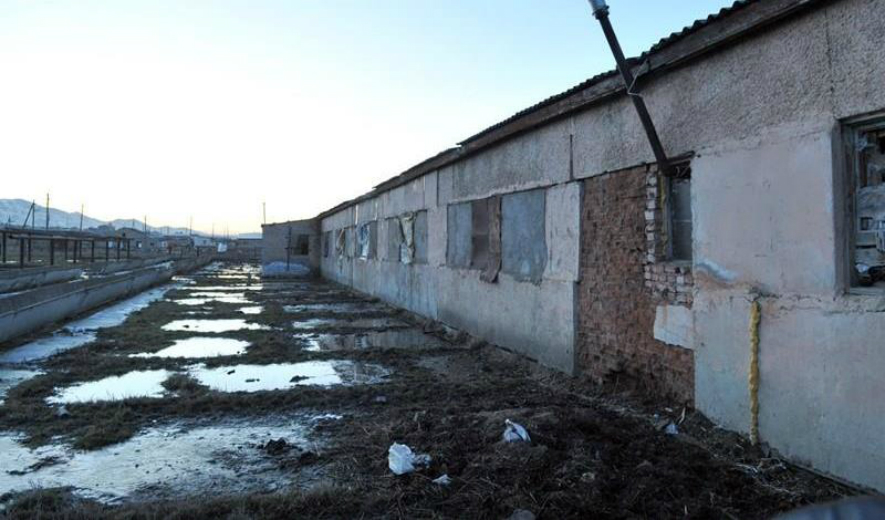 Жители Дагестана требуют закончить отстрел бродячих собак